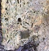 fossil1a.JPG
