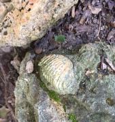 fossil3.JPG