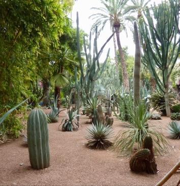 jm_cactus1.jpg