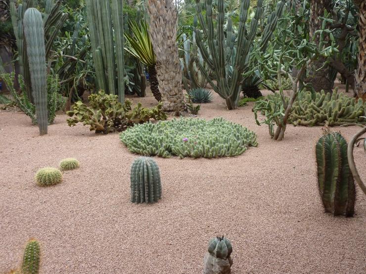 JM_cactus2