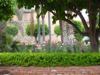 K_garden_rose6