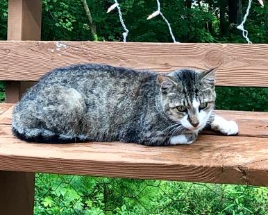 kingcat2