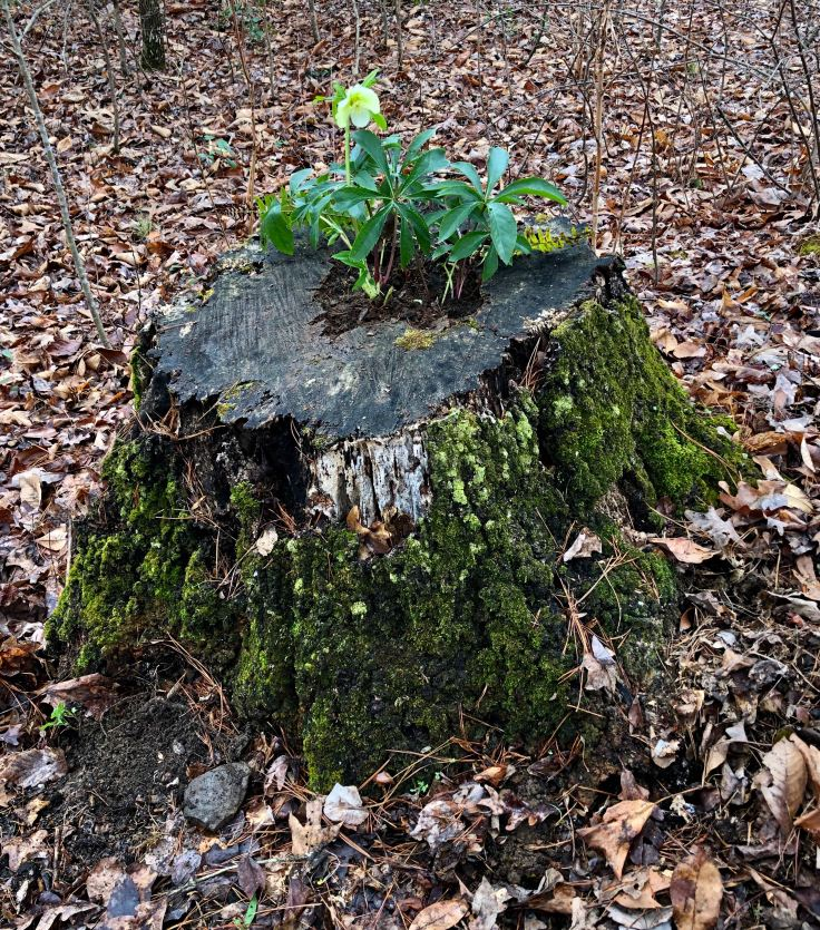 stump4