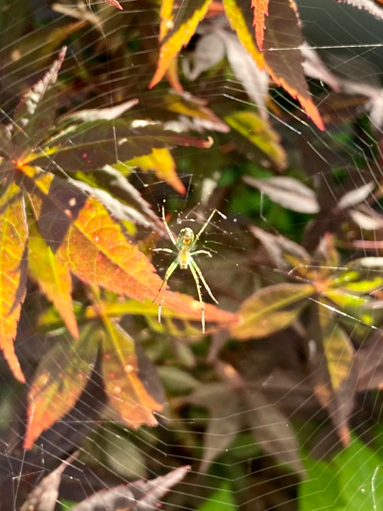 spider 10 June 2020